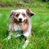 Photo for Walker Needed For 1 Dog In Anchorage
