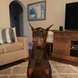 Photo for Looking For A Pet Sitter For 1 Dog In Stuart