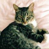 Photo for Cat Loving Pet Sitter Needed For Spring Break!!