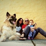 Photo for Sitter Needed For 1 Dog In Woodinville