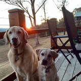 Photo for Looking For A Dog Nanny For 2 Dogs In Denver