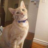 Photo for Sitter Needed For 1 Cat In Sunnyside