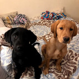 Photo for Walker Needed For 2 Dogs In Washington