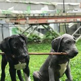 Photo for Sitter Needed For 2 Dogs In Geneva