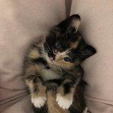 Photo for Sitter Needed For 1 Cat In Denver