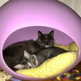 Photo for Cat Sitter Needed