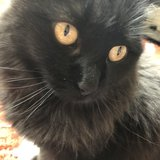 Photo for Sitter Needed For 1 Cat In Morgan Hill