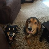 Photo for 2 Dogs Looking For New Human Friend To Walk Them!