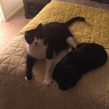 Photo for Sitter Needed For 2 Cats In Vienna
