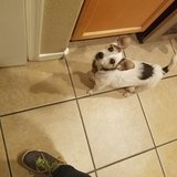 Photo for Drop-By/Check-In Sitter For Spoiled Jack Russell
