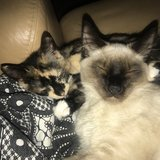 Photo for Looking For A Pet Sitter For 2 Cats In Oldsmar