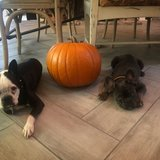 Photo for Looking For A Pet Sitter For 2 Dogs In Napa