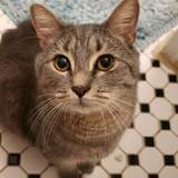 Photo for Sitter Needed For 1 Cat In Boston