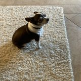 Photo for I am looking for  a  Pet Caregiver House Sitter