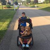 Photo for Walker Needed For 1 Dog In Greensburg