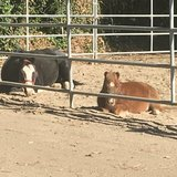 Photo for Looking For A Pet Sitter For 2 Horses In Oroville