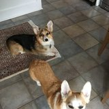 Photo for Walker Needed For 2 Dogs In Lewes