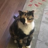 Photo for Shy Affectionate 10-year Calico Sitter