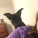 Photo for Looking For A Pet Sitter For 1 Dog In Covington