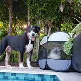 Photo for Looking For A Pet Sitter For 2 Dogs, 1 Cat In Sanibel