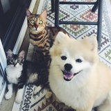 Photo for Looking For A Pet Sitter For 2 Cats In Westlake Village