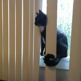 Photo for Sitter Needed For 3 Cats In Downey