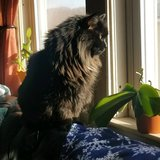 Photo for Looking For A Pet Sitter For 1 Cat In Worcester
