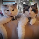 Photo for Looking For A Pet Sitter For 2 Cats In Mount Dora
