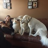 Photo for Looking For A Pet Sitter For 5 Dogs In Elkton