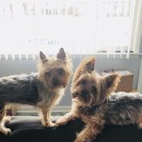 Photo for Looking For A Dog Walker For 2 Small Dogs In Palatine