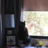 Photo for Housekeeper/ Petsitter