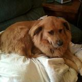 Photo for Sitter Needed For 1 Dog In Washington