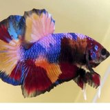 Photo for Fish Tank Cleaning For Bettas