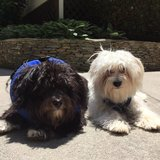 Photo for Looking For A Pet Sitter For 2 Dogs, 1 Cat In Charlotte