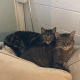 Photo for Looking For A Pet Sitter For 2 Cats In Burke