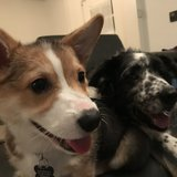 Photo for Walker Needed For 2 Dogs In Oakland