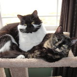 Photo for Sitter Needed For 3 Cats In Atlanta (Sandy Springs), Twice Daily Time Sensitive Visits