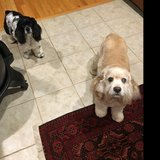 Photo for Looking For A Pet Sitter For 2 Dogs In Oswego