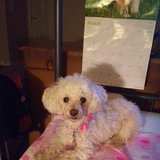 Photo for Looking For A Pet Sitter For 1 Dog In Cedar Park