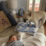 Photo for Honest, Caring, Trustworthy, Dog Lover And Has Experience With Newborns Babysitter