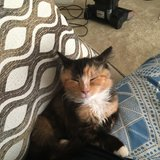 Photo for Looking For A Pet Sitter For 4 Cats In Falls Church