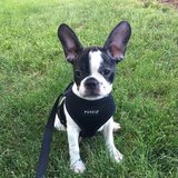 Photo for Walker Needed For 1 Dog In Wheaton