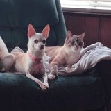 Photo for Walker Needed For 1 Dog, 1 Cat In Falls Church