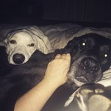 Photo for Looking For A Pet Sitter For 2 Dogs, 1 Cat In Dallastown