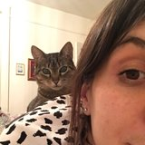 Photo for Looking For A Pet Sitter For 1 Cat In Astoria