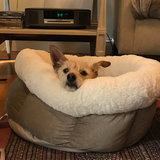 Photo for Looking For A Pet Sitter For 2 Dogs In Boston