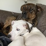 Photo for Looking For A Pet Sitter For 2 Dogs In Columbus