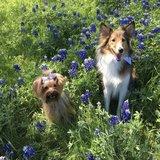 Photo for Dog Feeding And Walking