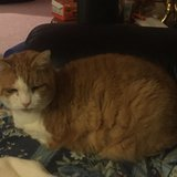 Photo for Sitter Needed For 1 Cat In Bordentown