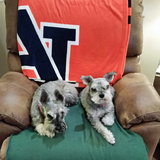 Photo for Sitter Needed For 3 Dogs In Spring Lake